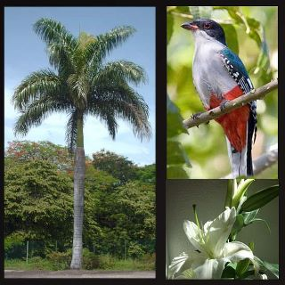 20120224074813-atributos-cubanos.jpg